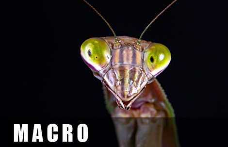 macro-thumb